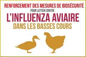Protection des élevages - Elévation du niveau de risque de l'influenza aviaire