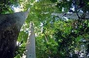 Plan régional forêt bois Hauts-de-France 2020-2030